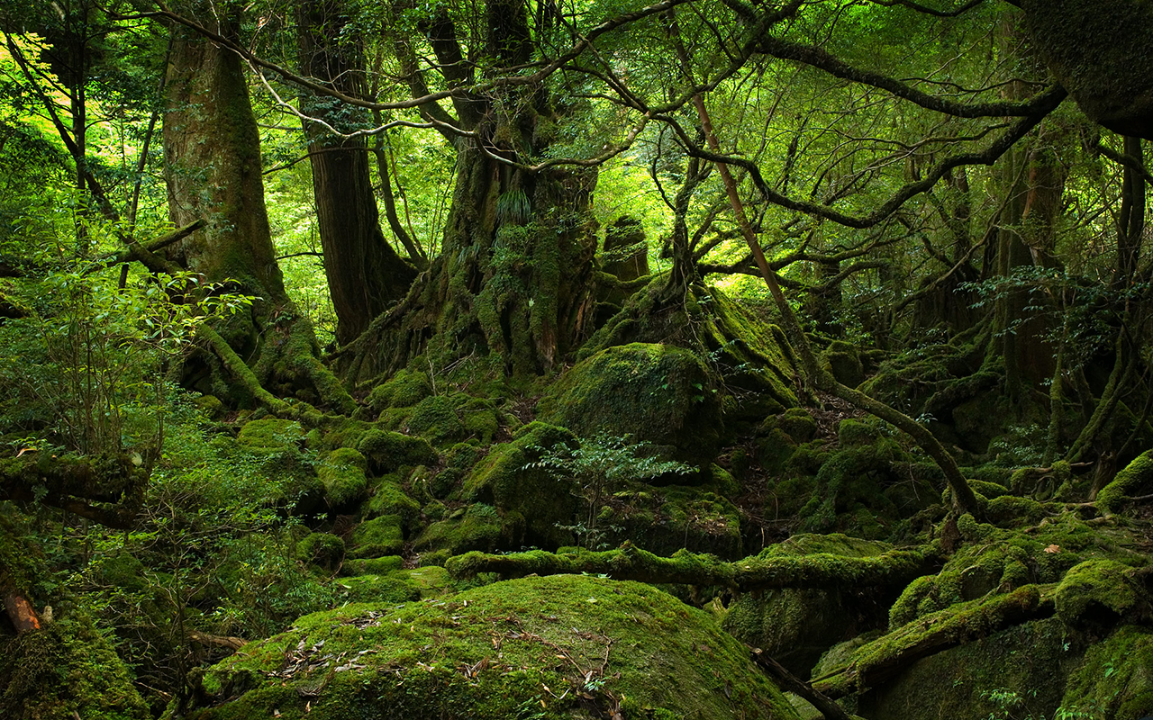 yakushima_archives_forest_1280x800.jpg